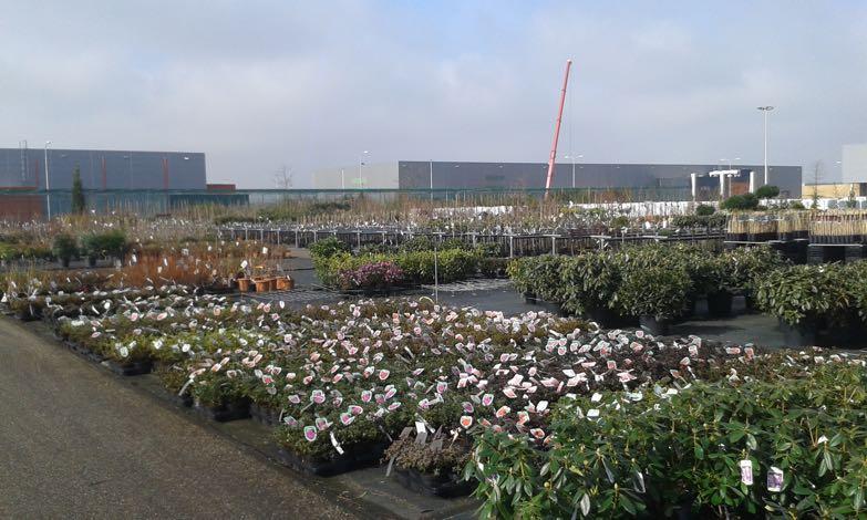 tuinplanten-hovenier-venlo-2