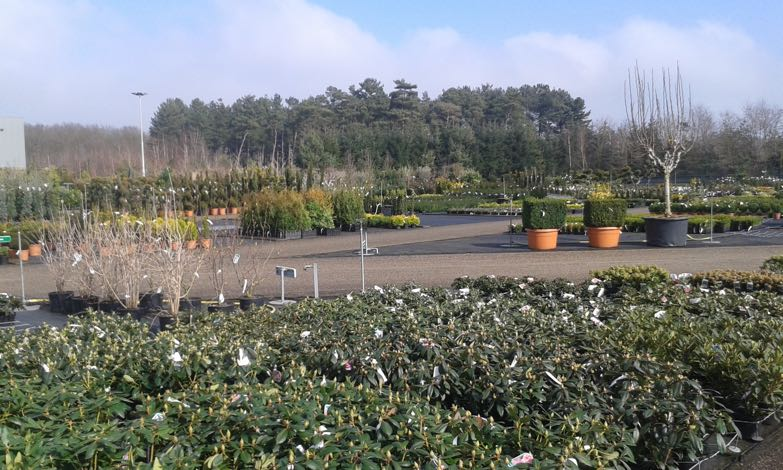 tuinplanten-hovenier-venlo-3