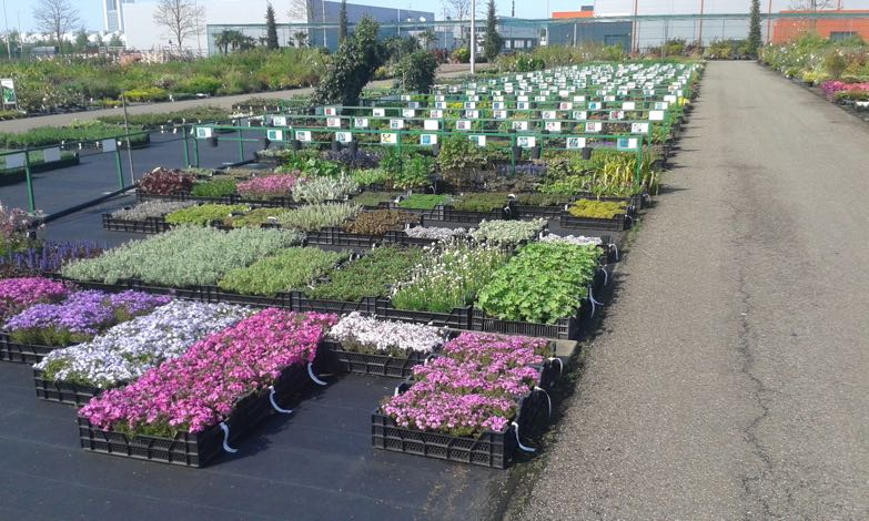 tuinplanten-hovenier-venlo-4